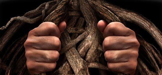 manos raices