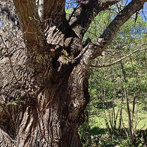 tronco arbol
